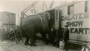 fritz-elephant-ep2-2