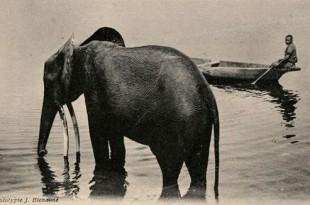 fritz-elephant-ep3-6